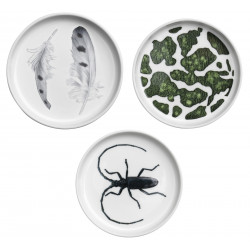 Swedish Redlist Tray 10 cm Set of 3 Snowy Owl, European Green Toad, Greater Capricorn Beetle Rorstrand